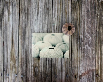 Seashells Home Decor, Sea Urchin Photography, Beach Art