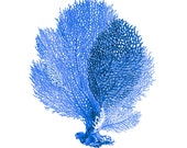 Blue Sea Fan Coral Nautical Art Print Natural History Beach House Decor Royal Blue