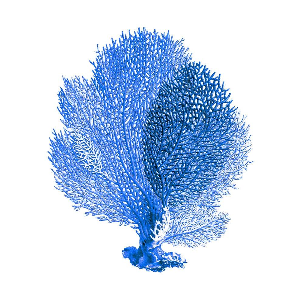 Blue Sea Fan Coral Nautical Art Print Natural History Beach