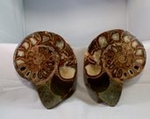 Collectible Fossils Large Sliced Ammonites 6 inch Specimens Polished Matched pair DanPickedMinerals