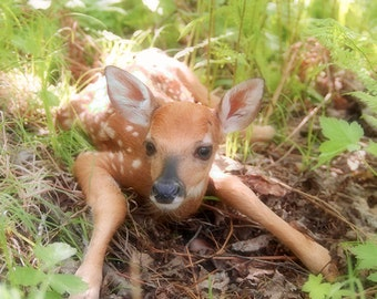 Fawn Print, Newborn Whitetail Deer, Nature Photography, Fine Art Photography, Deer Print, Fawn In The Woods