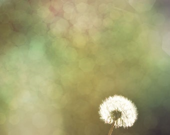 Dandelion in the Sun - Fine Art Photograph Print 12x12 - Teal, Bokeh, Nursery, Nature Photography