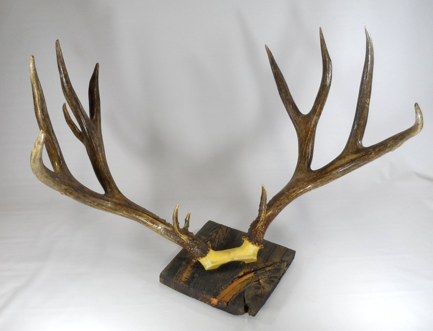 Items Similar To Wall Hanging Antlers XL Vintage Mule