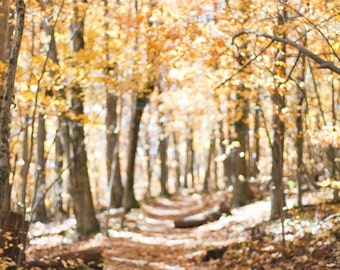orange autumn path, forest fine art 4x6 signed print