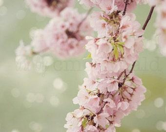 Cherry Blossom Photography, Washington DC Photography, Tidal Basin, National Cherry Blossom Festival, Sakura, Pink, Romantic photography