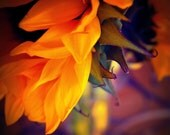 SUNFLOWER ABSTRACTION photography