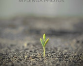 New Beginning - 8x8 Photo Print - MYDinga