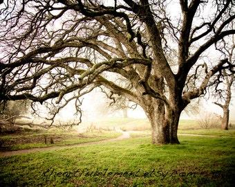 Misty Morning - Canvas wall art, Landscape Photography, Home Decor, color photography, park, winter, foggy, oak tree