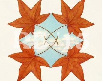 "Liquidambar Leaf Mirrored on Sky 16""x16"" Limited Edition Giclee Print (4/50)"