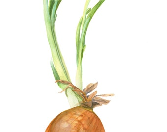 Sprouting onion, vegetable watercolor print for kitchen or cottage decor