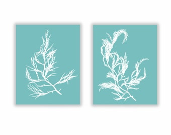 Sea Foam Coastal Decor Botanical Specimen, Seaweed Print Set of Two Large 11x14