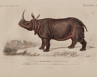 1869 antique RHINOCEROS fine engraving, by Charles D'Orbigny, 143 years old nice print
