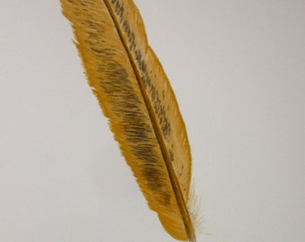 Golden feather -- original watercolour and coloured pencil painting