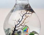 Marimo Aquatic Terrarium - Japanese Moss Ball - Teardrop Vase - Sea Fan - Marbles - Living Home Decor