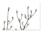 White Flowers Cottage Wedding Art Print -Dogwood Botanical Black White Minimalist