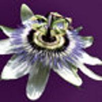 PassionflowerJewelry