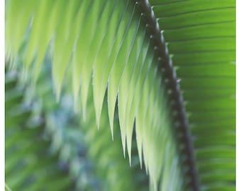 Nature Photography  - Green - Jade -  Fine Art Photograph - Plant - Green Leaves - Jungle - Fern - Alicia Bock - Oversized Art - Tropical