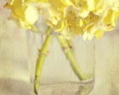 Fine Art Photography Floral Yellow Hydrangea 8x8 Print Modern Wall Decor Home Decor