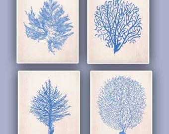 Nautical prints Sea Coral fan prints,  modern vintage inspired  by coral, kelp, gorgonian, seaweed, seashore prints,set of 4 prints 8x10,