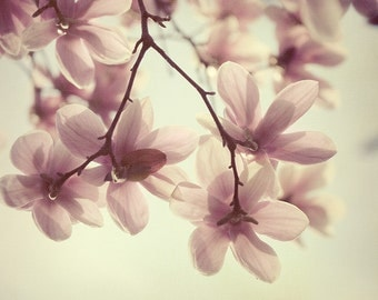 Spring Sunshine - Flower Photography, Easter Pastel, Magnolia Photograph, Romantic Wall Art, Nature, Pink, Yellow