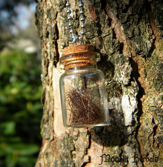 Sea Lion Totem Animal Spell Bottle Pendant -  LAST ONE - Selkie, Imagination, Creativity, Dreaming, Protection, Water Element, Amulet