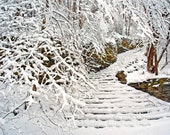 Minnesota Winter landscape photography. Nature. Snow covered branches. Snowy stairs. Blizzard. 11x14 print