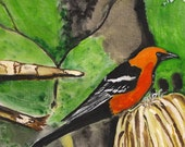 Hooded Oriole - Original Watercolor - 9 x 12