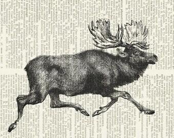 moose running print