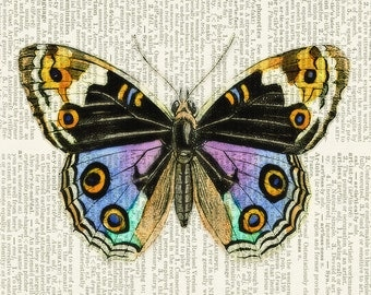 butterfly, gorgeous colors print