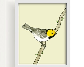 "bird, bird drawing, ink drawing, wall art, wall decor, large wall art, yellow, gray, vanilla, modern art, home decor, art - ""Hermit Warbler"""