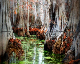 Instant Download Printable Photo Bayou Art Nature Water Photography Green Red Moss Fall Trees Swamp Lake house Print Louisiana Bayou Cypress