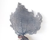 Sea Fan Nautical Blue Coastal Decor - SandisShellscapes