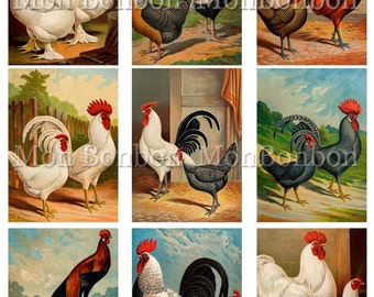 Vintage Roosters and Chickens No.2  Digital Collage Sheet   - DIY Printable - INSTANT DOWNLOAD