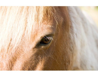 Horse Photo - Palomino - Fine Art Photograph - Tan Horse with White Mane Photo - Horse Eye Print - Animal Photo - Nature Wall Art
