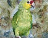 Amazon Parrot Original 4x5 inch Oil Painting