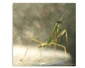 Praying Mantis Photograph Insect Entomology Natural Art Affordable Nature Art Green Insect Bokeh Natural Light