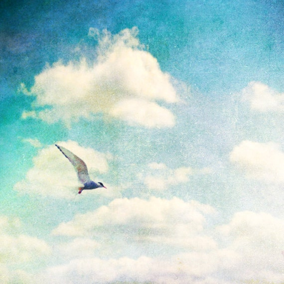 Nature photography, bird photography, beach print, blue accent, cream, tern, gull, skyscape, dreamy