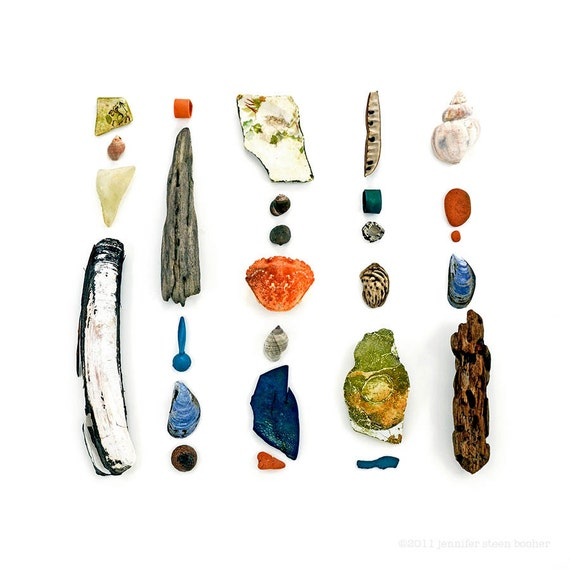 Beachcombing Series No.19, 8 x 8 photograph - dritwood, clam, shell, mussel, seaglass, crab, whelk