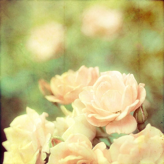 Flower photography shabby chic decor springtime bloom botanical flower print pink and green - Tea and Roses 8x8 photograph