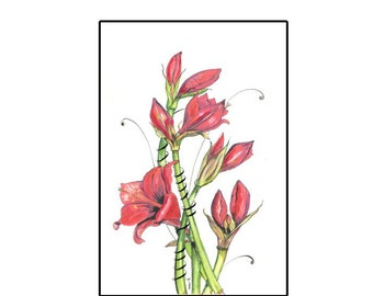 Watercolor Amaryllis  Greeting card