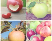 Set of 4 Apple 8x8 Fine Art Photography Prints