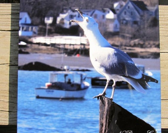 Cawing Seagull photograph printed on metal