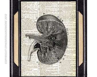 KIDNEY ANATOMY art print medical science nephrology doctor on upcycled vintage dictionary book page black white anatomical illustration 8x10