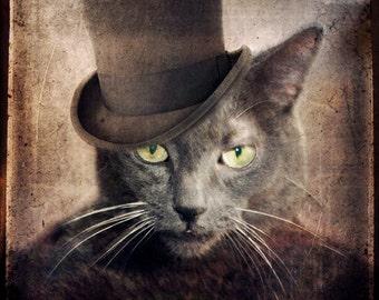 Gray Cat Photo Russian Blue Animal Photography Modern Family Eric Stonestreet Hector Elizondo Pet Portrait  Print - Captain Grey