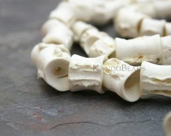 20 Fish Vertebrae beads, Fish Bone Beads, Natural Fish Bones, Fish Spine Bones, Taxidermy
