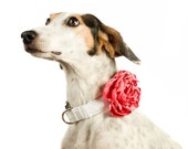 Wedding Dog Collar Flower - Coral Satin - BowWowCouture