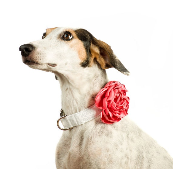 Flower Collar Wedding Dog