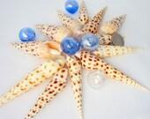 "Beach Decor Seashells - Spotted Nautical Terebra Specimen Shell, 3-5"",  3pc"