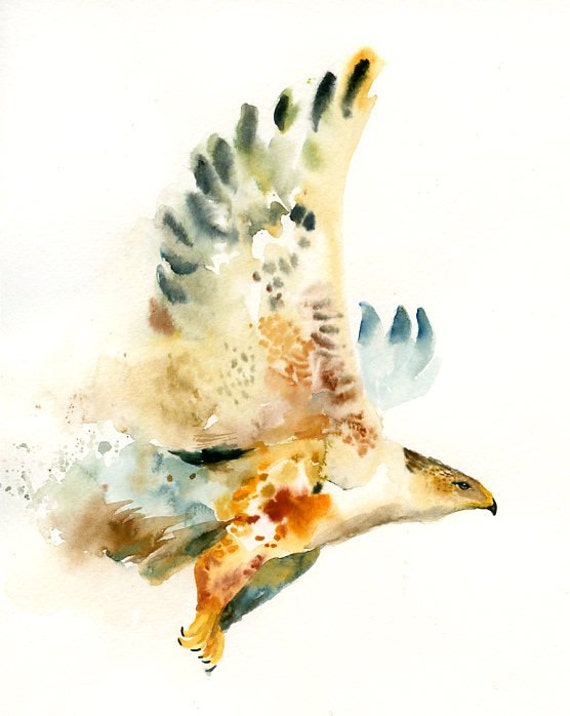 Hawk painting watercolor - photo#4