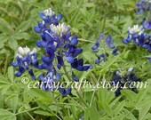 Bluebonnet seeds TX state flower great housewarming gift for gardens